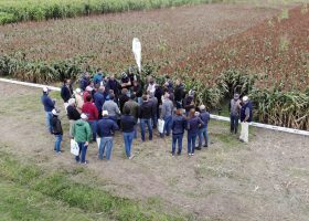 Advanta expects igrowth™ to reshape global sorghum cultivation.