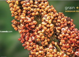 Sorghum Product Guide
